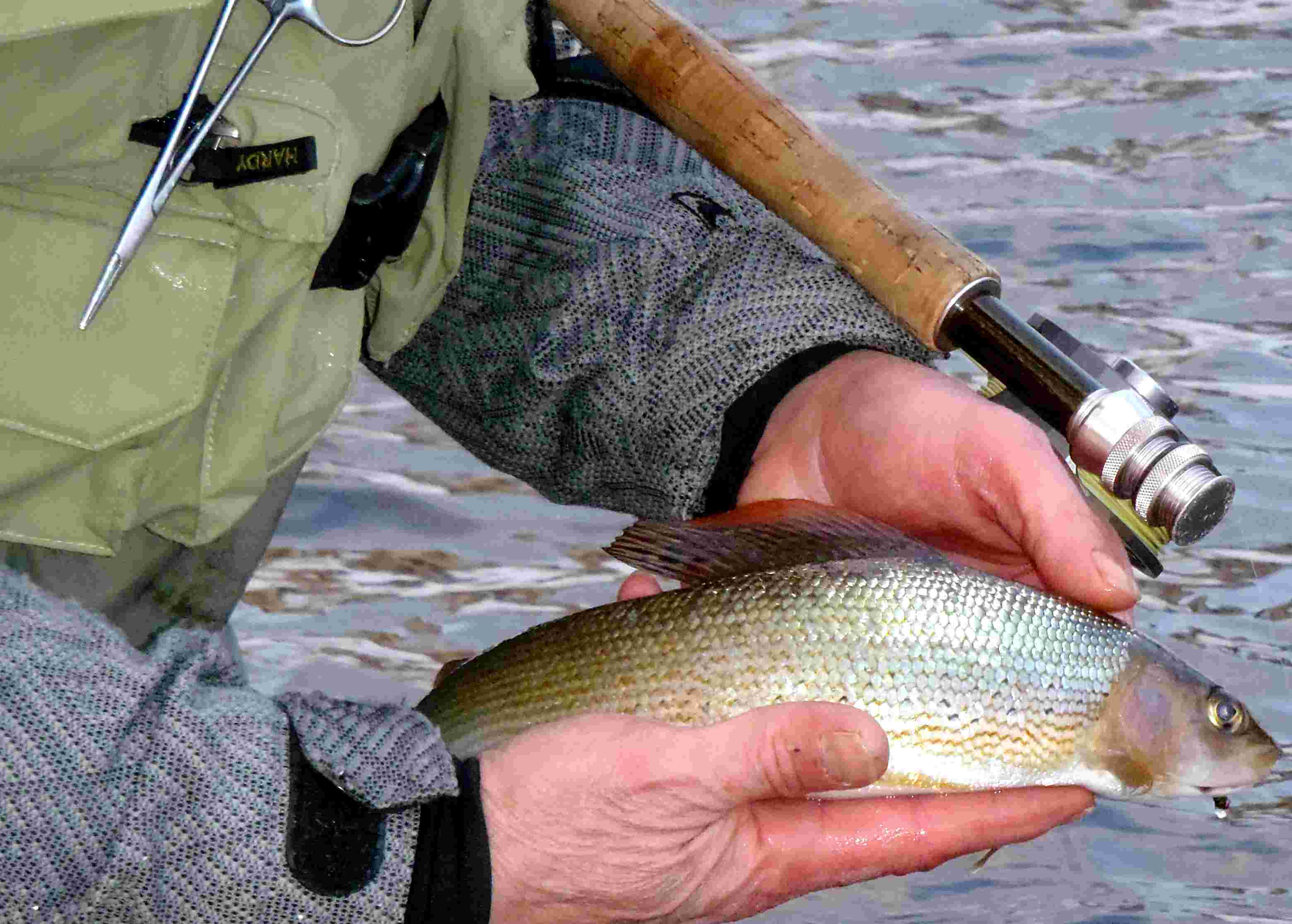 nice grayling in winter Czech republic